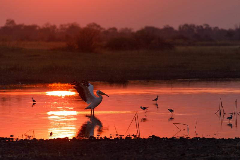 Botswana_0818_PSokol-1070.jpg