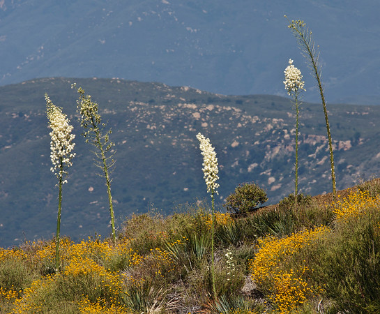 Los Padres National Forest, Nordhoff Ridge