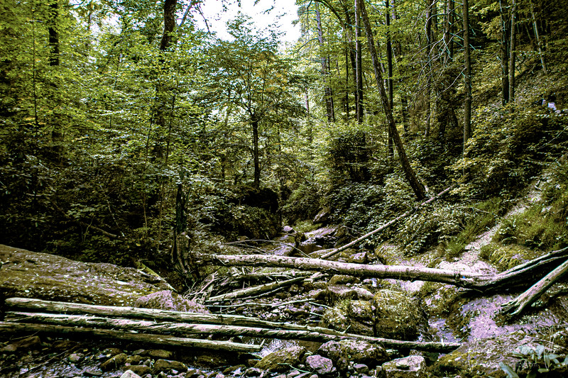 greek-new-jersey-hiking-trail-photography-video-jorge-sarmiento-jr-IMG_7061.jpg