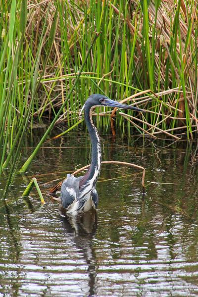 20156-03-24 Green Cay Wetlands |  Delray Beach, Florida