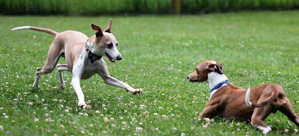June Dog Fun