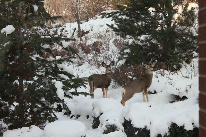 Deer_outside_May_01_06_2013_4548.JPG