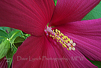 Gardens Fine Art Photography By Dave Lynch