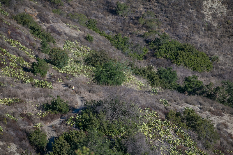 10k Vista trail