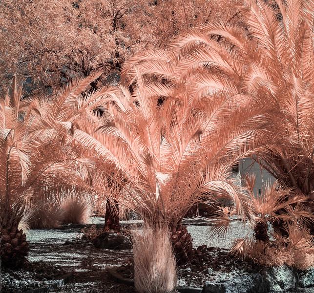 Garden Full of Palm Trees.jpg