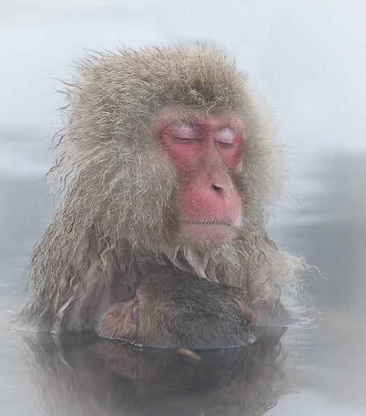 Monkey motherhood