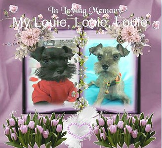 Lil Louie, DOB 10/20/2012