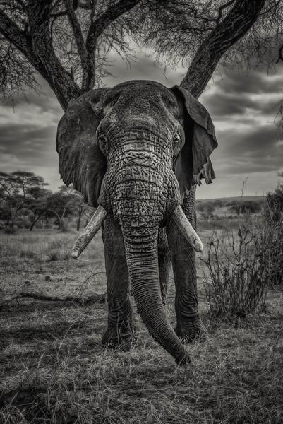 Tanzania-safari-8.jpg
