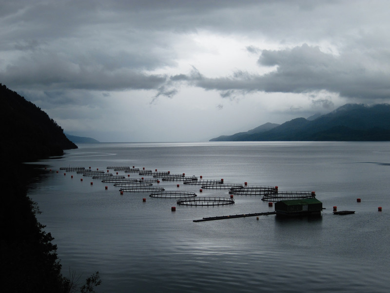 Fish Farm in Puerto Puyuhuapi Can