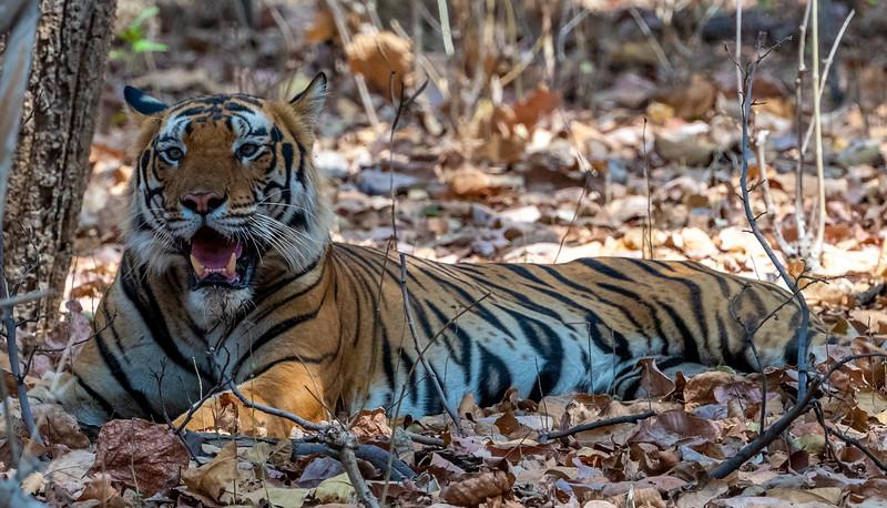 India_April_2019-52.jpg