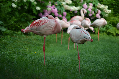Zoo July 2011