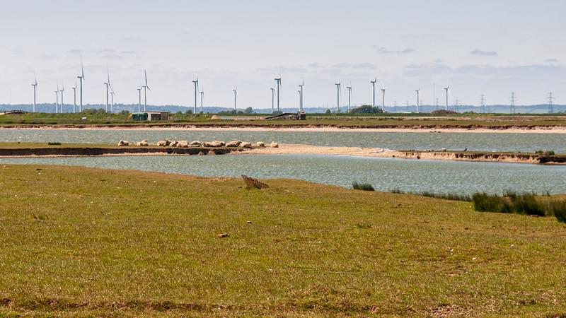 Power lines on Romney Marsh