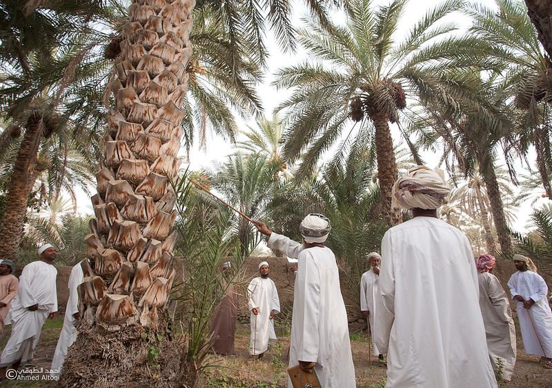 Palm Tree Auction 6- Mudhaibi.jpg