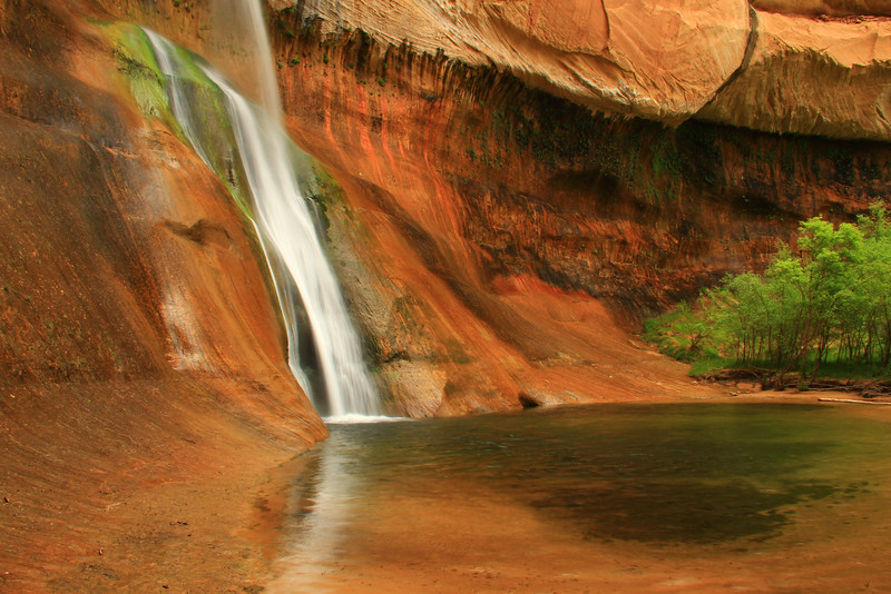 Calf Creek Falls and Grove