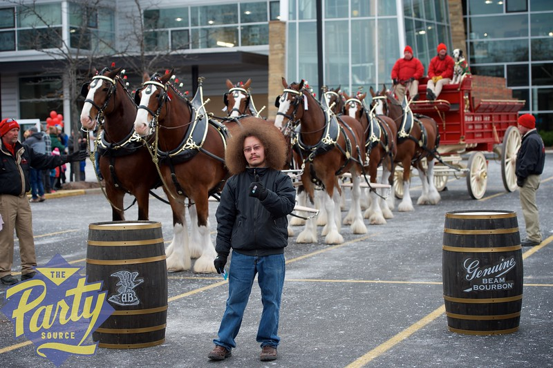 Clydesdale Portraits 37.jpg