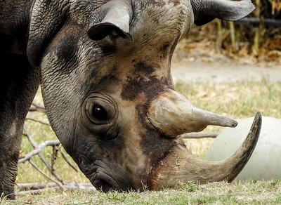 Rhino & Hippo