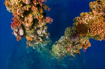 Micronesia (Chuuk and Pohnpei) 2010