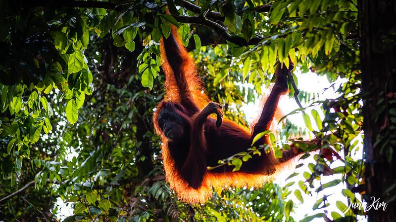 2012.10.07_Borneo_DSC_6830-Edit-Juno Kim.jpg