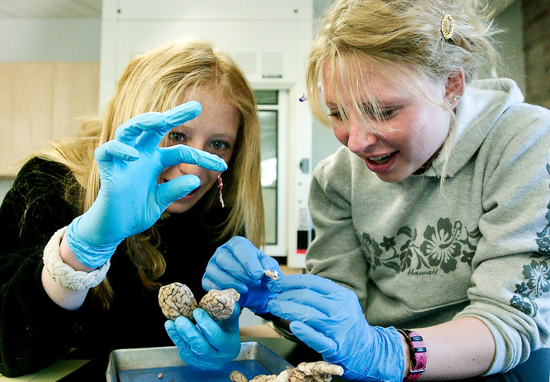 "Carly Sewell, left, and Katrina DeVore, both of Aspen, Colo., inspect the brain of a sheep as the two study the complex organ during biology class at Aspen High School. Although Sewell said the gray matter was ""slimy"" and she would never become a brain surgeon, it also made her realize how complex the brain is. ""It makes me want to learn more about it,"" she said."