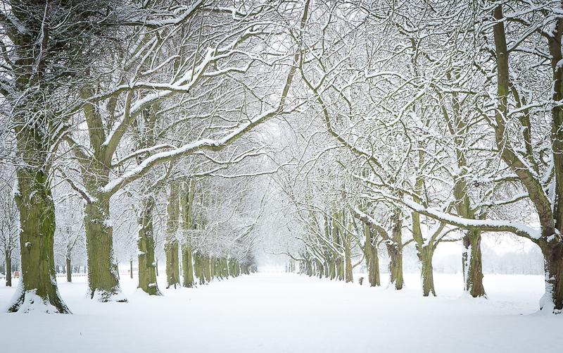 Coombe trees.jpg