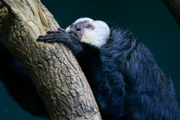 National Zoo 7.12-13.08