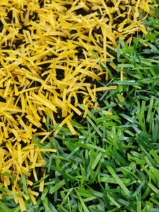 The Texans new synthetic turf