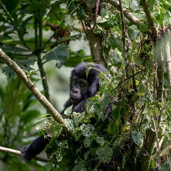 Uganda_T_Gor-1206.jpg