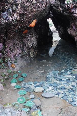 Shi Shi Beach 2006