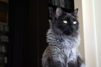 April 2008 Cats