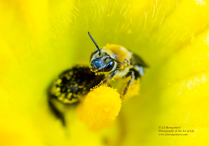 """""""What are You Looking at?  Can't you see I bee busy collecting pollen?"""""""