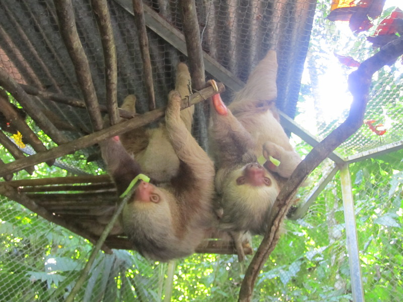 Panama Costa Rica 2013 578.jpg
