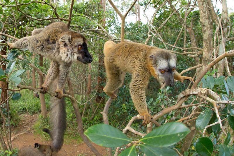 Madagascar_2013_FH0T8924.jpg