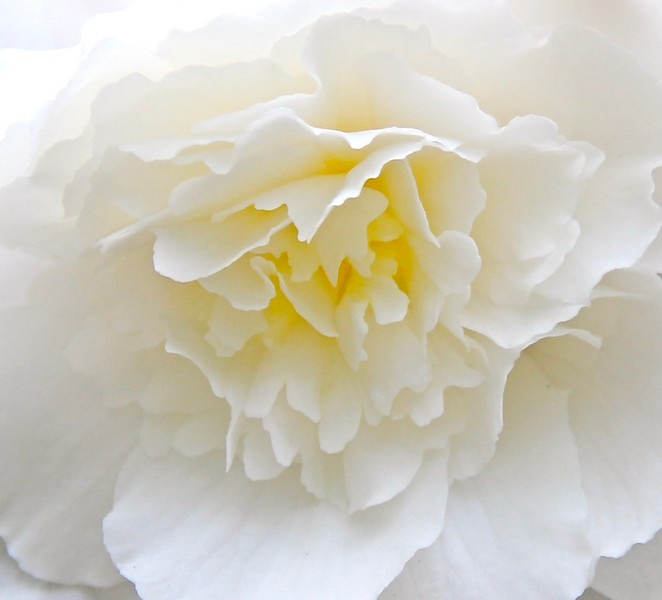 White flower up close.jpg