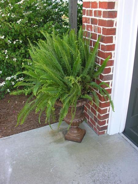 Azelea_Wilmington_2007_005.jpg