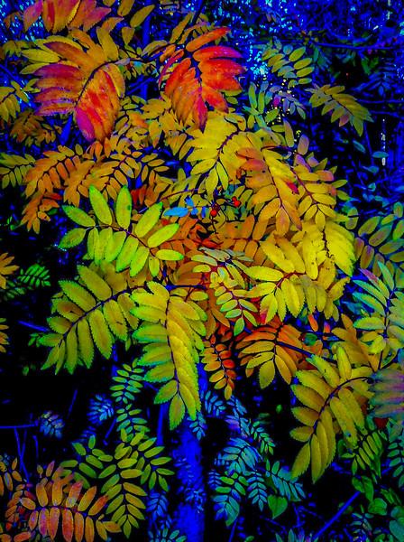 Fall Color, Liberty Lake, Washington