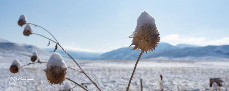 snow-01157.jpg