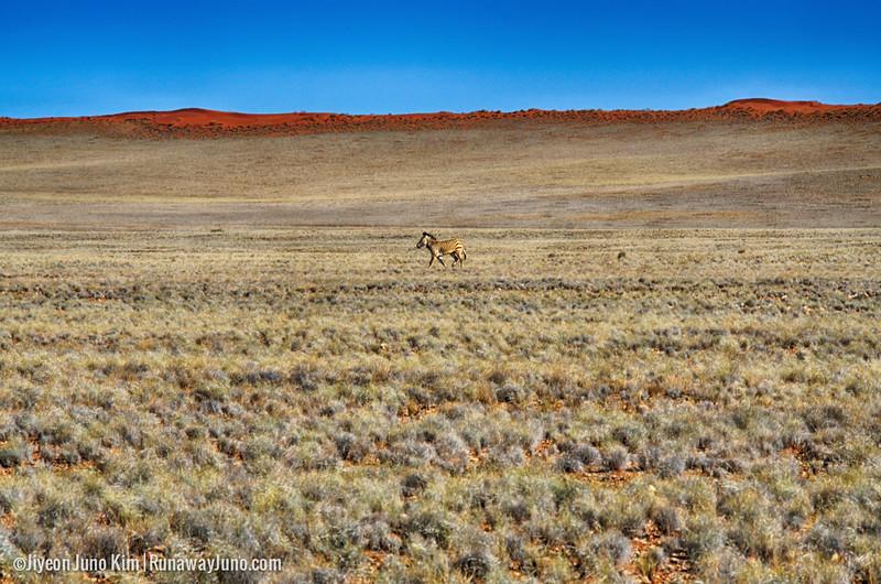 Namibia-Zebra.jpg