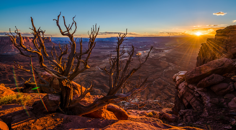 The sun sets over Canyonlands National Park in Southern Utah with the Green River below and a Utah Juniper in the foreground