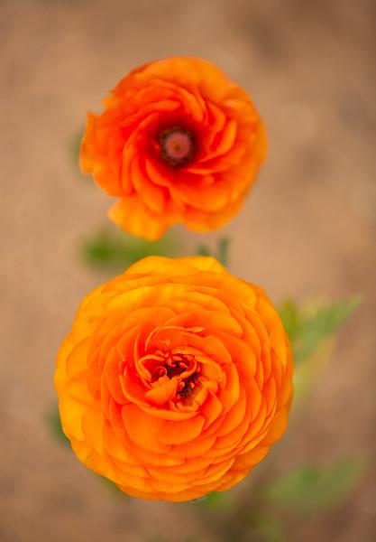Spring Flowers B-450.jpg