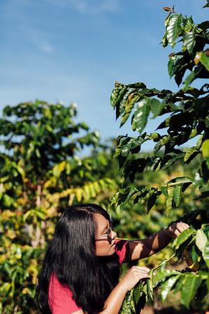 Big Island Coffee