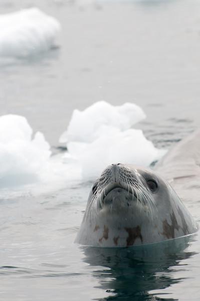 Antarctica 2015 (74 of 99).jpg