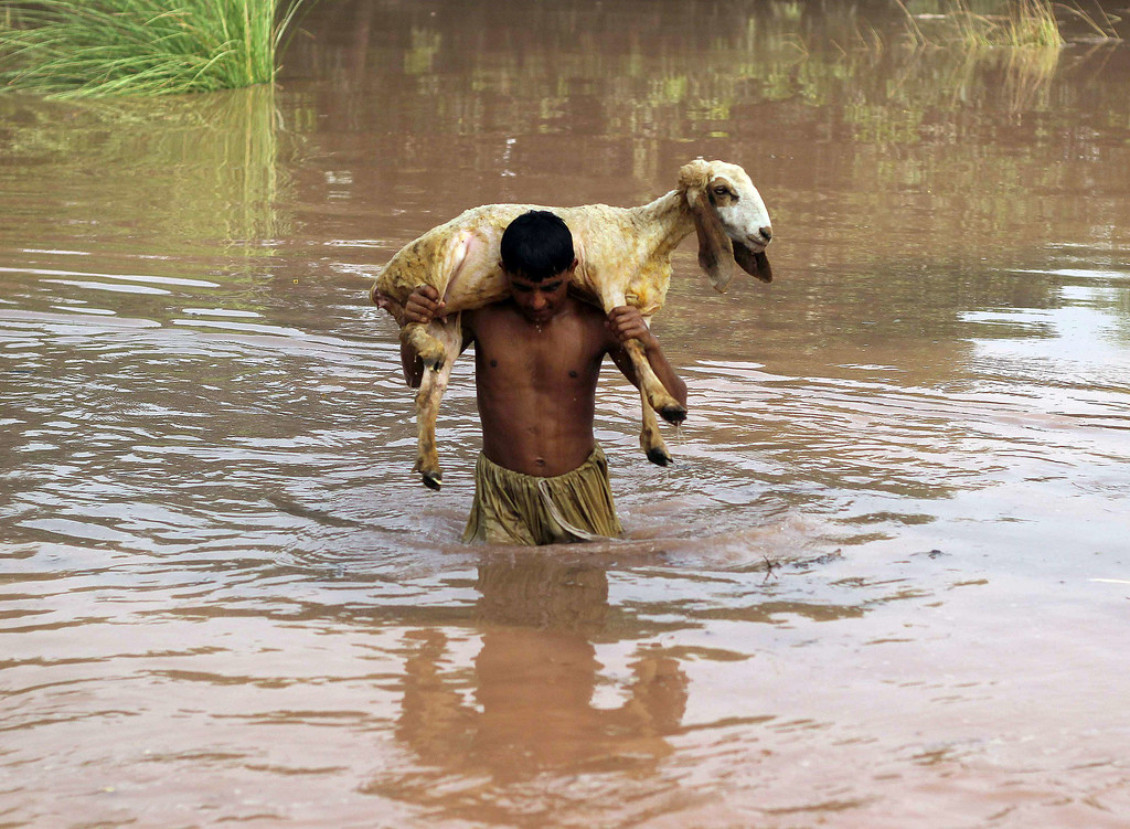 . A Pakistani man carries a sheep on his back as he wades through floodwater at a village on the outskirts of Multan, in the central Punjab province on September 10, 2014.    AFP PHOTO/ SS MIRZA/AFP/Getty Images