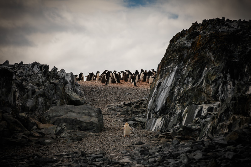_MG_6758_20170122_Antarctica.jpg