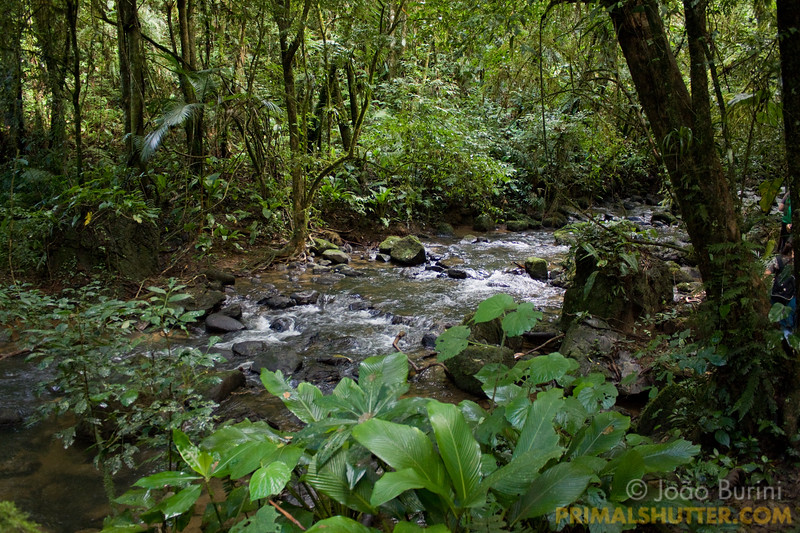 Atlantic forest river