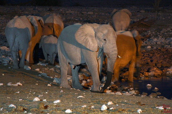 elephant group at night in Etosha National Park, Namibia 2