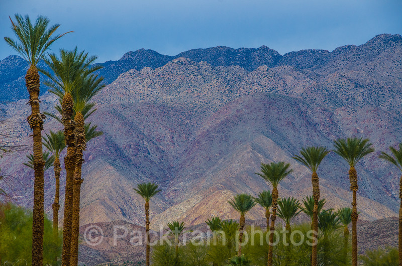 Borrego Springs Palms  - BSP - 1