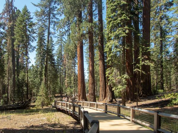 Wawona Lookout - Yosemite NP
