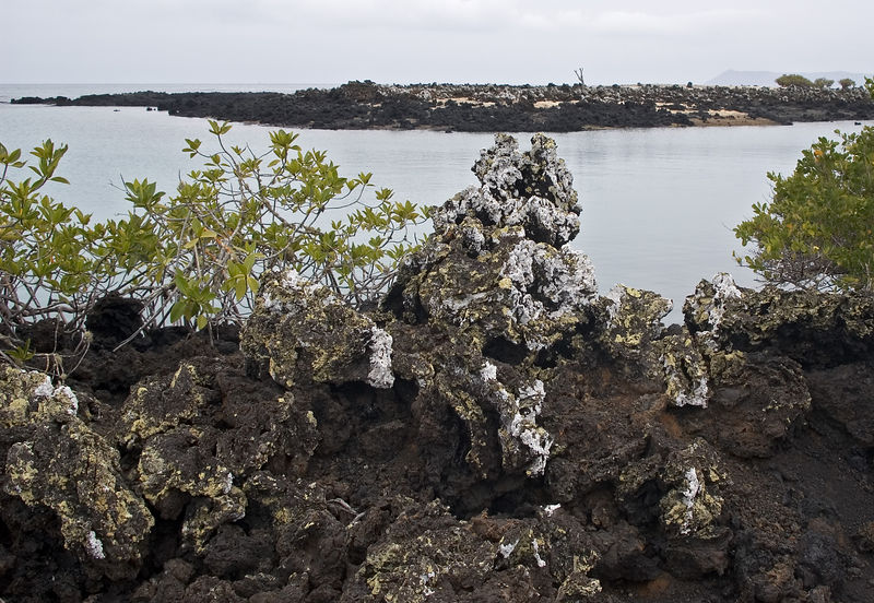 Landscape of lava rocks and bird droppings   (Dec 10, 2005, 01:46pm)