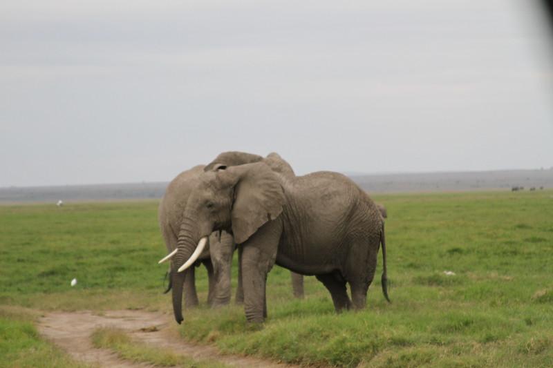 Kenya 2019 #2 1593.JPG