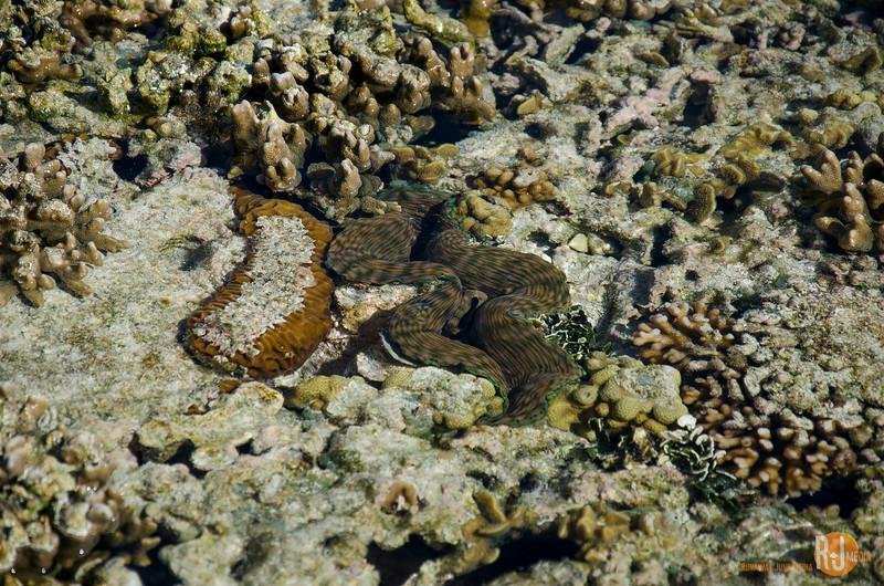 Australia-queensland-Lady Elliot Island-6157.jpg